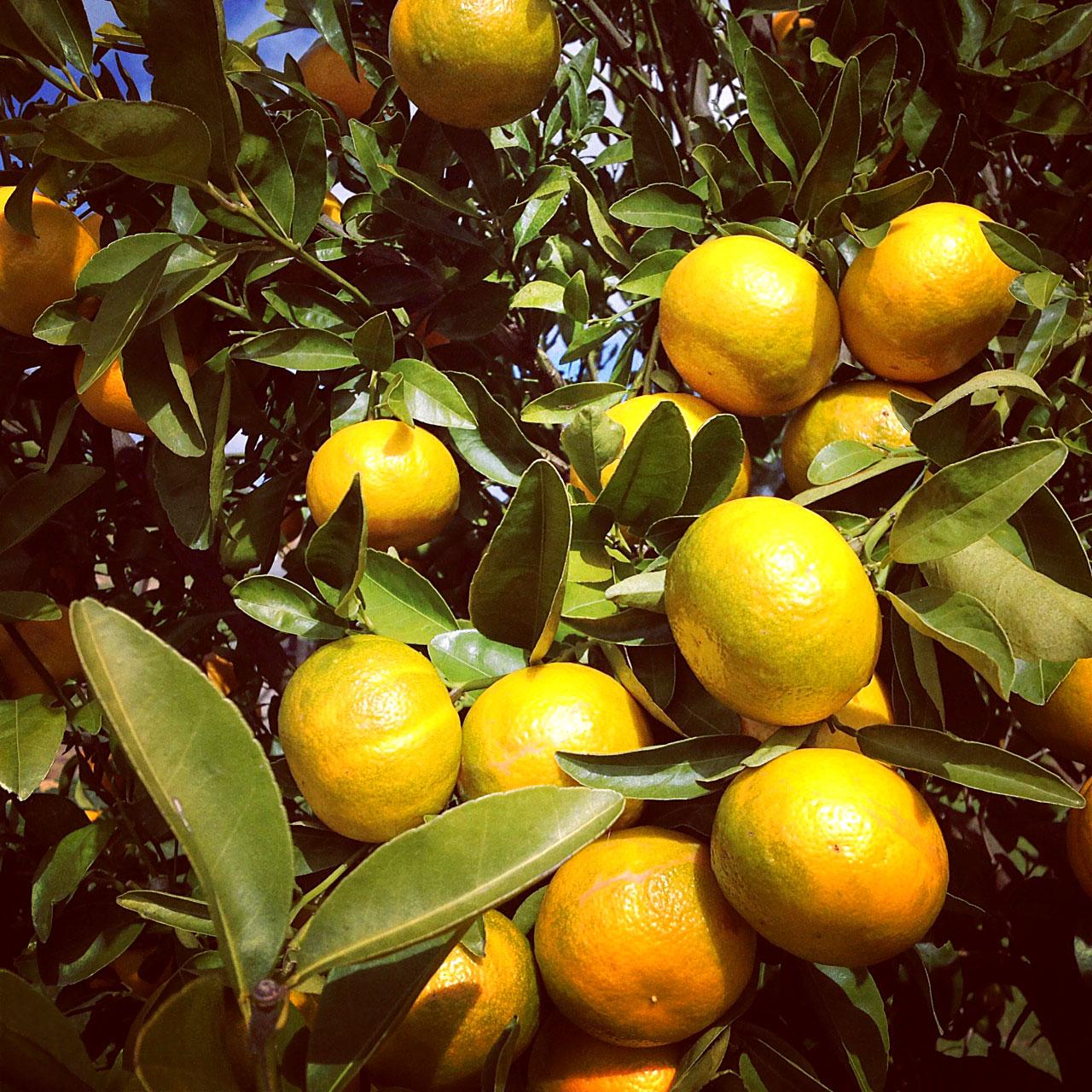 Hancock & Farm fresh lemons